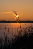Winter, sunset on the lake. Lake, sunset, gold grass, evening Stock Images