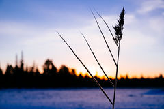 Winter sunset on the lake Royalty Free Stock Photography
