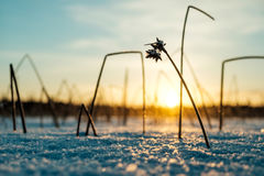 Winter sunset on the lake Royalty Free Stock Image