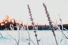 Winter sunset on the lake Royalty Free Stock Photo
