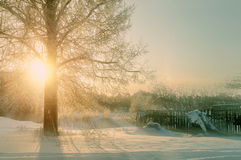 Winter sunset landscape with the frosty winter trees and sunlight beams -winter landscape scene Stock Photography