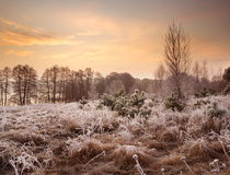 Winter sunset landscape Stock Photos