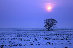 Winter background - sunset with lonely tree. In snowy field royalty free stock image