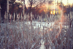 Winter sunset on the marsh Stock Photos