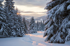 Winter sunset over the forested mountain valley Stock Images