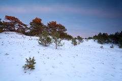 Winter sunset over snowy forest Royalty Free Stock Photography