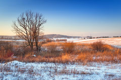 Winter sunset over snowy meadow. In Poland Stock Photos