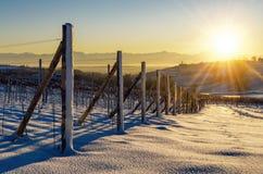 Winter sunset over the vineyards of Barolo Langhe, Piedmont,Ita stock photo