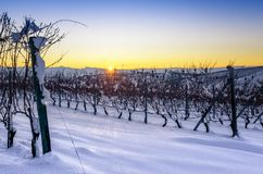 Winter sunset over the vineyards of Barolo Langhe, Piedmont,Ita Royalty Free Stock Photos