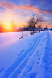 Winter sunset in a park Royalty Free Stock Photography
