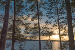 Winter sunset with pine trees over a frozen lake Royalty Free Stock Photo
