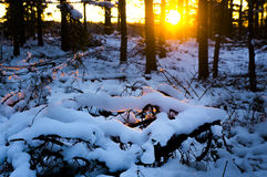 Winter sunset in scandinavian forest Stock Images