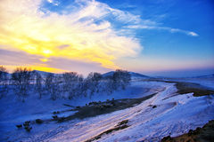 Winter sunset. With silver birch and  the sheep ,Chifeng,china Stock Image