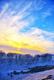 Winter sunset. With silver birch and  the sheep ,Chifeng,china Stock Photography