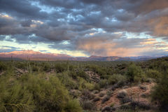 Winter Sunset, Sonoran Desert. Arizona royalty free stock photos