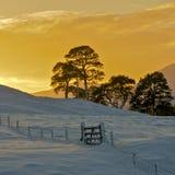 Winter Sunset royalty free stock photos