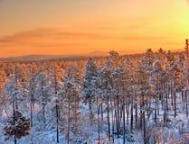 Winter sunset taiga royalty free stock photos