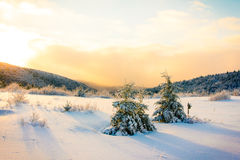 Winter Sunset. Winter time snow in Canada Royalty Free Stock Images