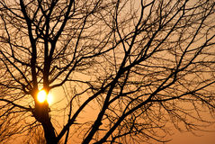 Winter sunset and a tree Stock Image