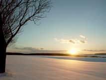 Winter sunset with tree on the field stock photo
