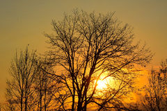 Winter sunset tree silhouette Royalty Free Stock Photography