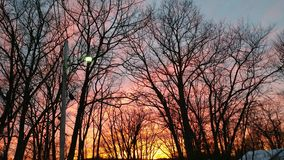 Winter Sunset Through The Trees. A beautiful red and yellow winter sky at sunset viewed through bare oak trees Royalty Free Stock Image