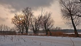 Winter sunset treetops sunlight landscape snow stock footage