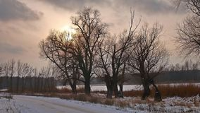 Winter sunset treetops sunlight snow landscape stock video