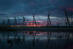 Winter sunset in vineyard Royalty Free Stock Photography
