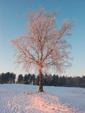 Winter  suntree Royalty Free Stock Images