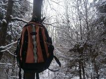 Winter survival Stock Photos