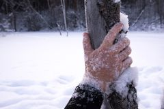 frozen, hand, cold stock photo