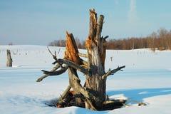 Winter swamp Stock Photos