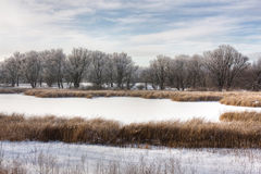 Winter swamp. View of winter swamp with reeds Stock Photo