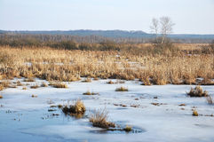 Winter swamp Stock Images