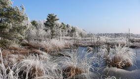 Winter Swamp. Hoar-frost near a forest in nothern germany Royalty Free Stock Image