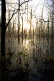 Winter Swamp Royalty Free Stock Photos