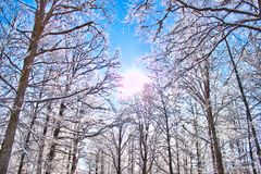 Winter in the Swedish forest Royalty Free Stock Photo
