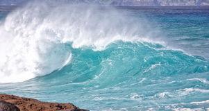 Winter swells. Large wave from winter swells at Hookipa, Maui. Hookipa is a beach on the north shore of Maui, Hawaii, USA Royalty Free Stock Image