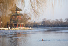 Winter Swim In Beijing Royalty Free Stock Photography