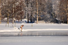 Winter-swimmer preparing to swim Royalty Free Stock Photography