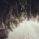 Winter swinter stock photography