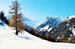 Winter in Swiss Alps Royalty Free Stock Photo
