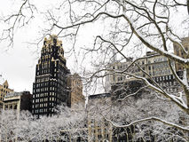 Winter Sycamore Bryant Park Stock Image