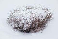 Winter symbol. a winter tree. Bush in a hat made of snow stock photo