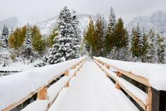 Winter-Szene Lizenzfreie Stockfotografie