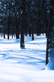 Winter-Szene Stockbilder