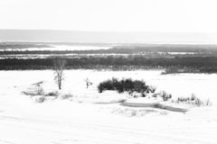 Winter-Szene: Frosty Landscape mit gefrorenem Fluss und Bäumen Stockbild