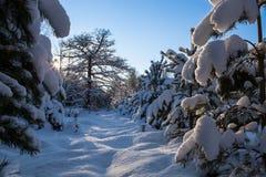 Winter szenisch Lizenzfreie Stockfotografie
