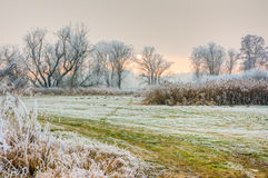 Winter szenisch mit forsted Bäumen Lizenzfreie Stockfotos